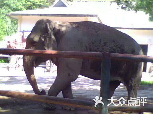 温州动物园图片 - 第55张