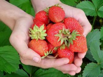 千岛湖草莓园