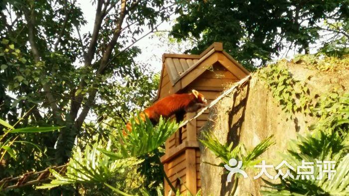 广州动物园图片 - 第3张