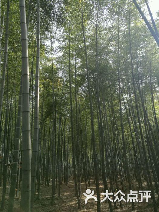 陶祖圣境风景区图片 - 第1张