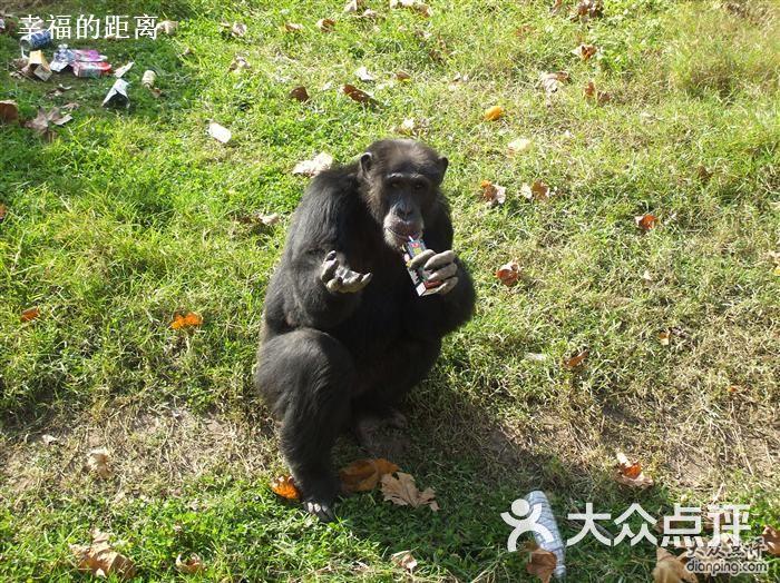 上海野生动物园水豚图片-北京动物园-大众点评网