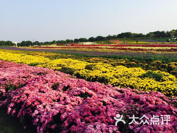 五厍农业休闲观光园图片 - 第21张图片