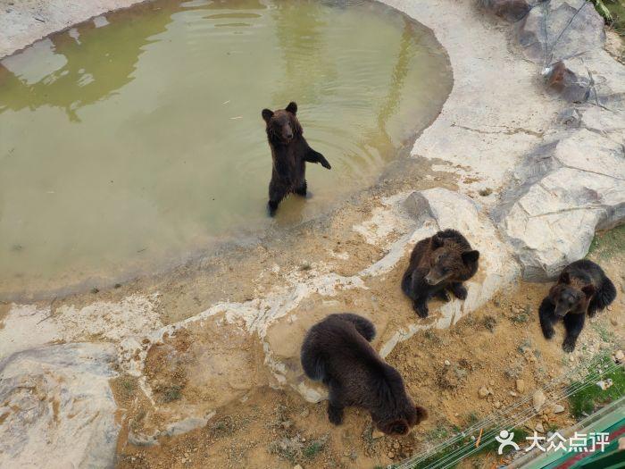 永鸿野生动物世界图片 - 第136张