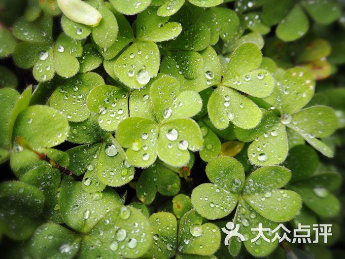 瘦西湖风景区-图片-扬州景点-大众点评网