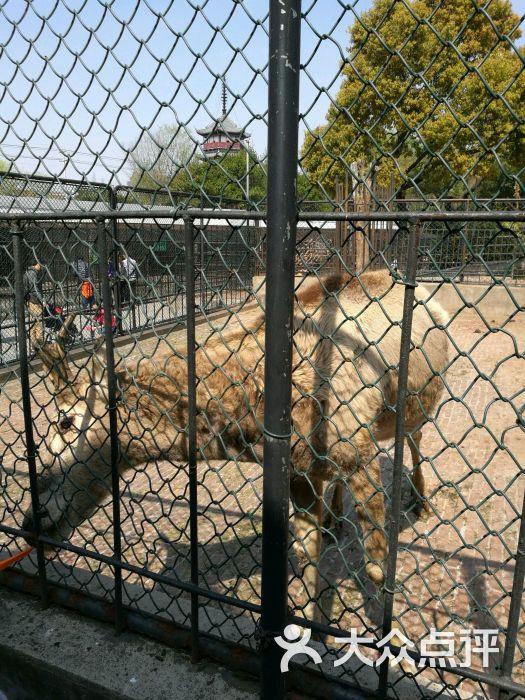 南通动物园图片 - 第4张