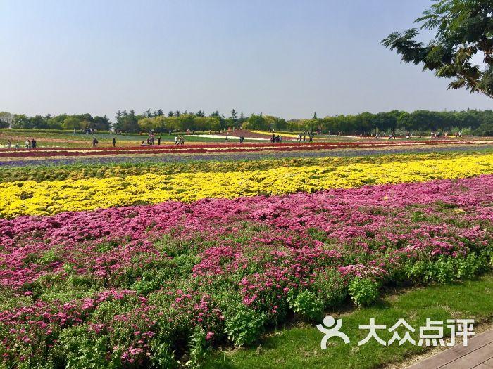 五厍农业休闲观光园图片 - 第3张图片