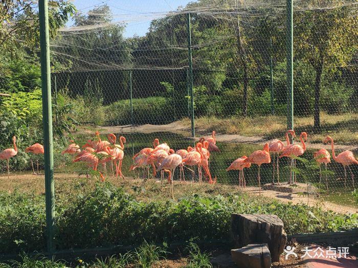石家庄动物园图片 - 第40张
