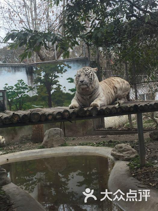 成都动物园景点图片 - 第3张