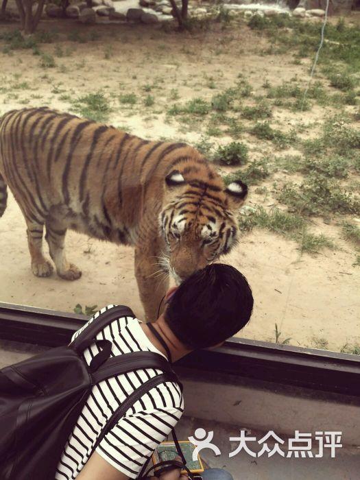 北京野生动物园-图片-北京景点-大众点评网