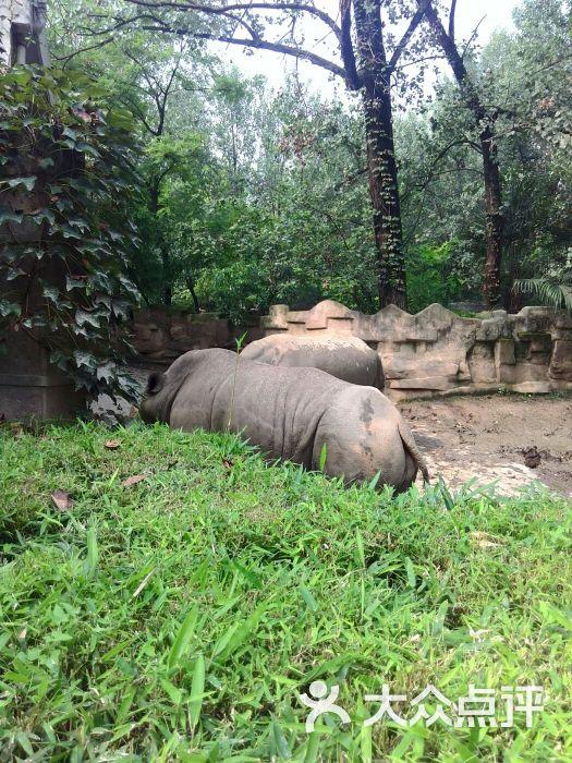 成都动物园图片 - 第10张