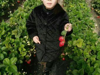 好运来草莓采摘园