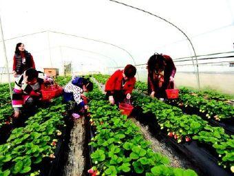 喻氏草莓基地