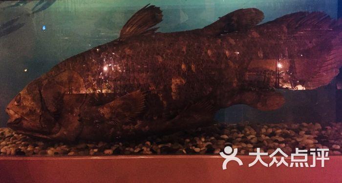 中国古动物馆图片 - 第11张
