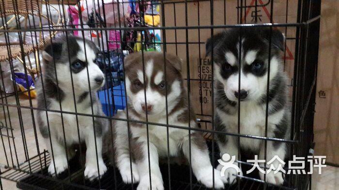 厦门哪里有宠物店_鑫宠部落宠物店厦门口碑好上传的图片
