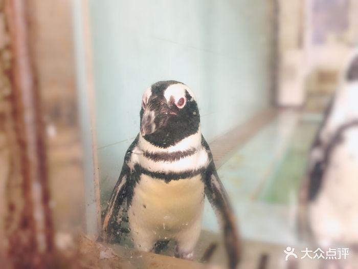温州动物园图片 - 第25张