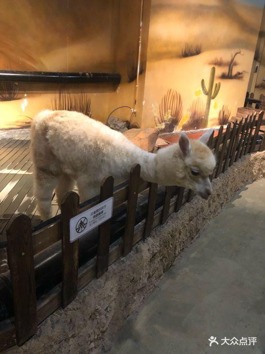 天津zoonly动物主题公园图片 - 第25张