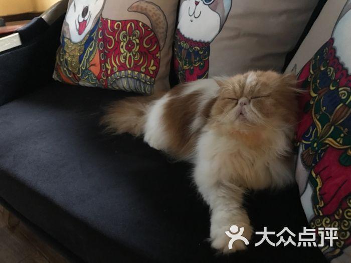 小猫餐具简笔画