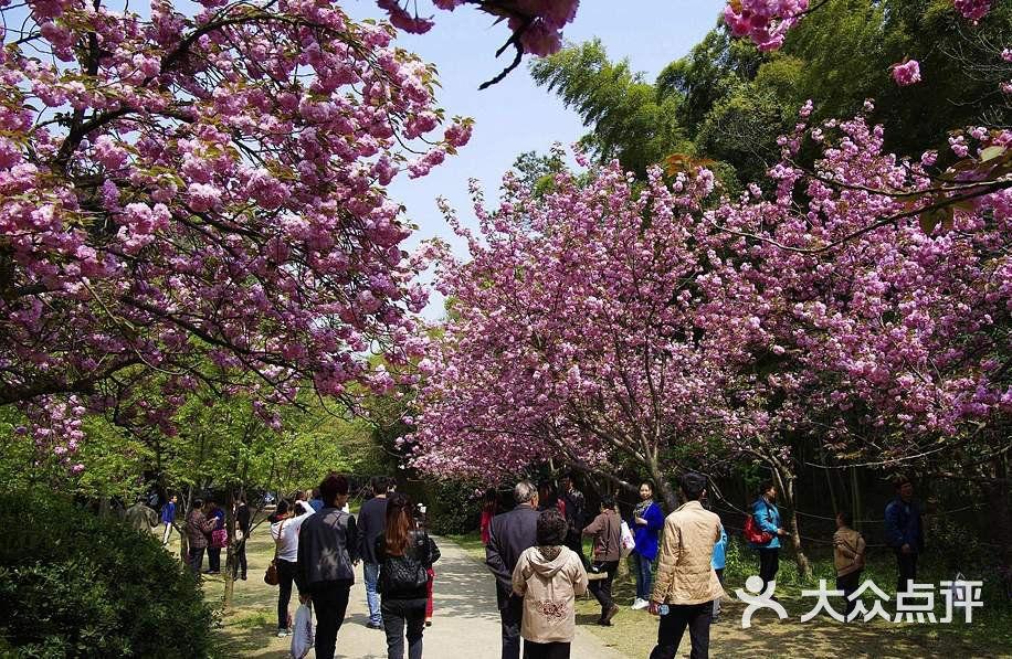 樱花谷景点图片 - 第3张