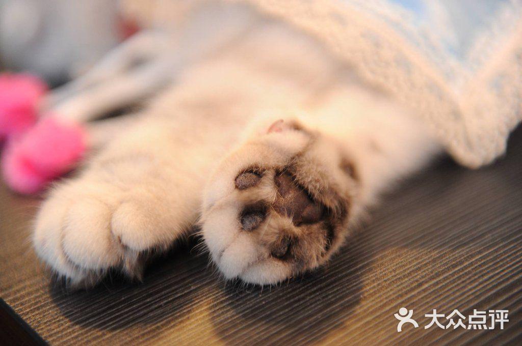 大型动物爪子图片