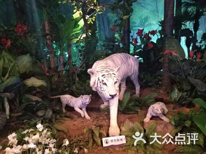 横店圆明新园·动物乐园-图片-东阳周边游-大众点评网