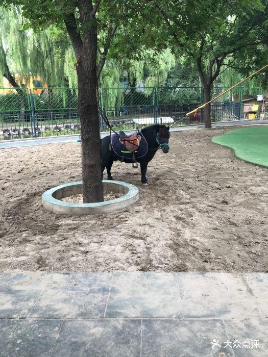朝阳公园亲子动物园图片 - 第360张
