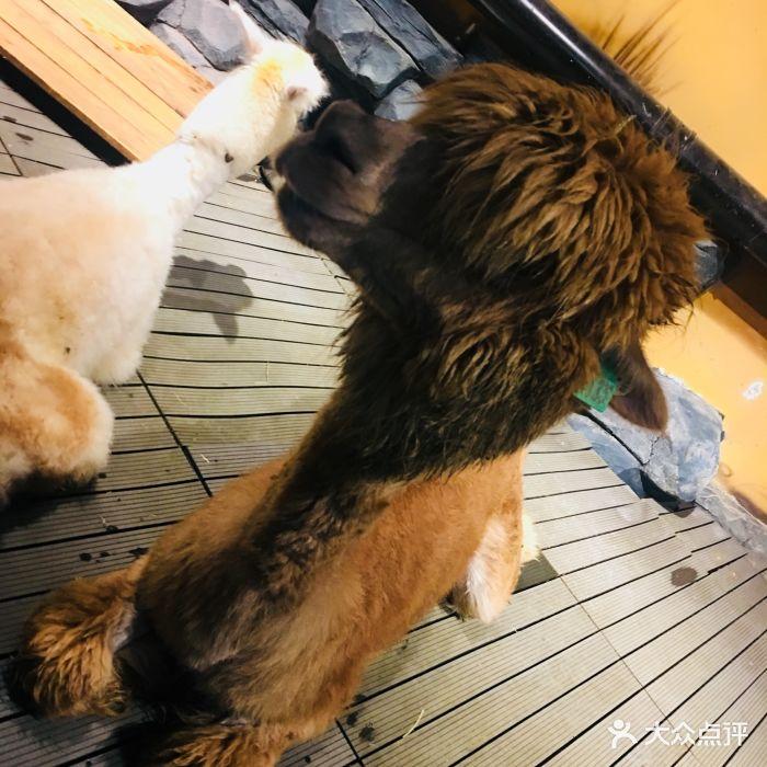 天津zoonly动物主题公园图片 - 第74张