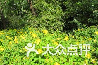 新江湾城公园