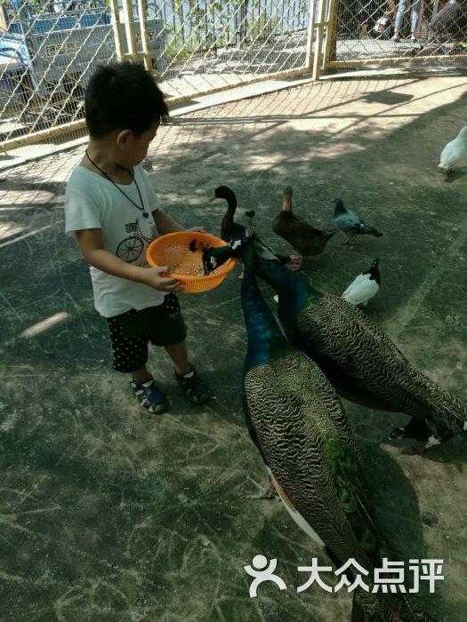 朝阳公园亲子动物园-love祥云的相册-北京周边游-大众