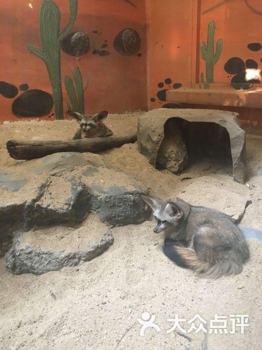 律实动物园图片 - 第1张