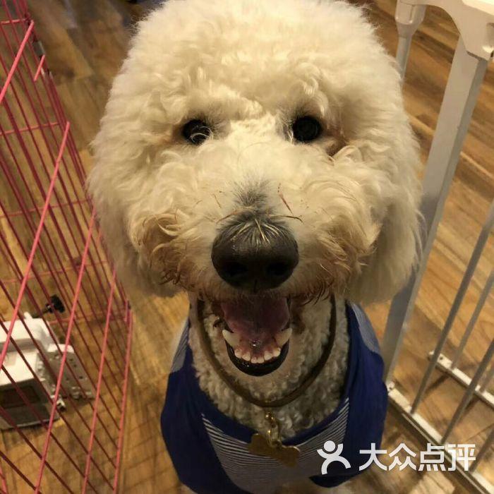 维多动物医院医院门牌图片-北京宠物医院-大众点评网