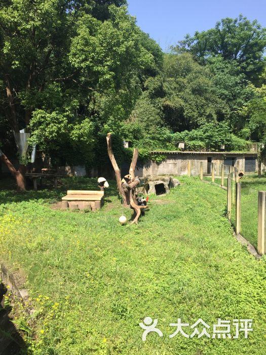 重庆动物园图片 - 第11张