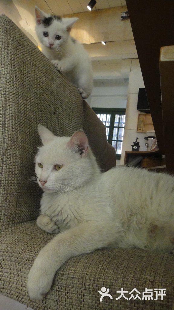 全部图片 其他 猫妈妈和小猫仔 xjjpanda上传的图片