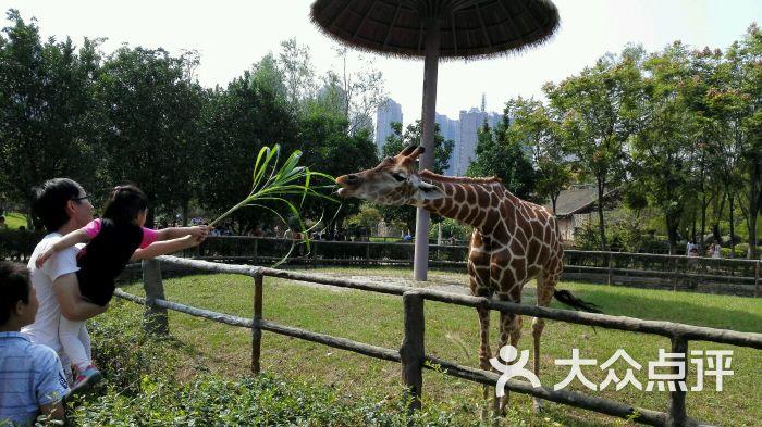 南昌新动物园图片 - 第3张