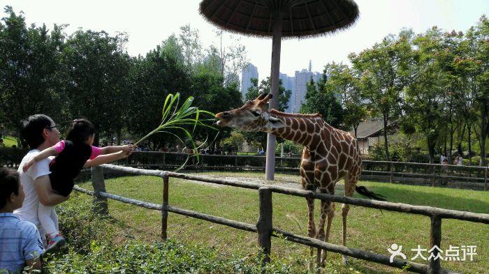 南昌新动物园图片 - 第832张