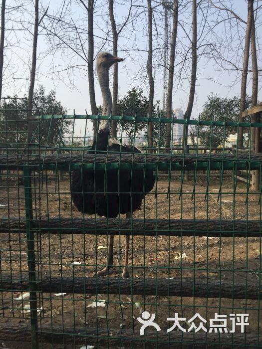 泰州市动物园图片 - 第2张