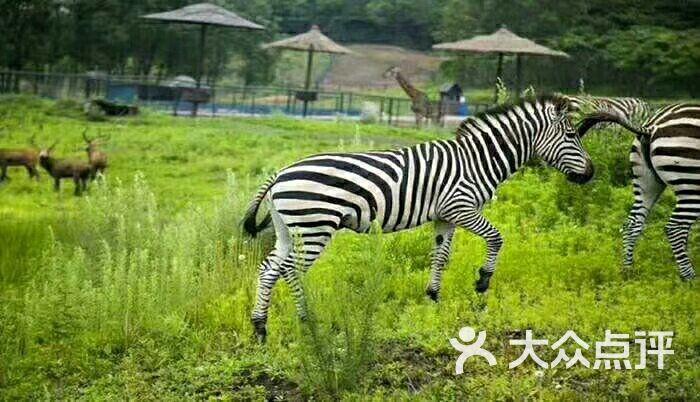 棋盘山森林野生动物园游乐场图片 - 第2张