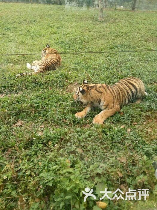 东莞寮步香市动物园图片 - 第107张