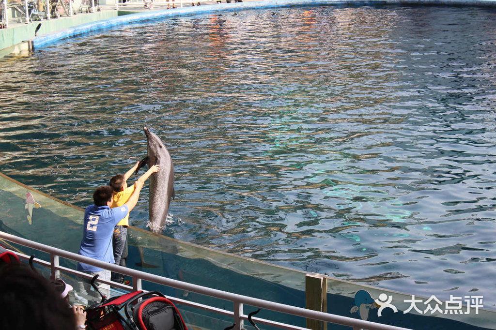 深圳野生动物园-海豚表演图片-深圳景点-大众点评网