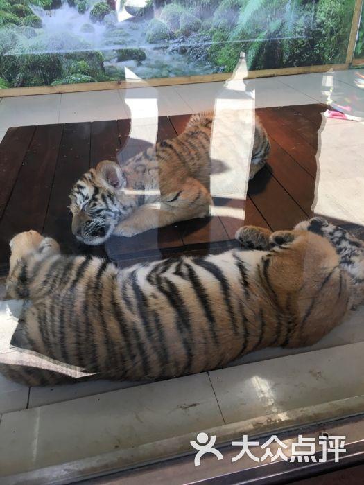 上海野生动物园的全部评价-上海-大众点评网