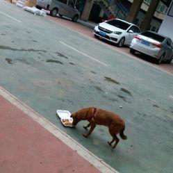 泉州本地人口味爱好_泉州西街图片