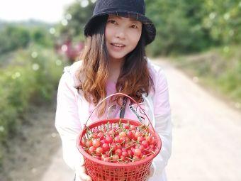 宜昌正伟樱桃专业合作社