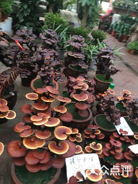 曹庄花卉市场图片 - 第72张