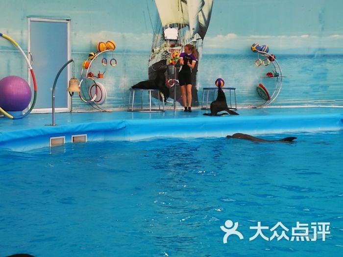 尼莫海豚馆-海豹表演图片-普吉岛景点玩乐-大众点评网