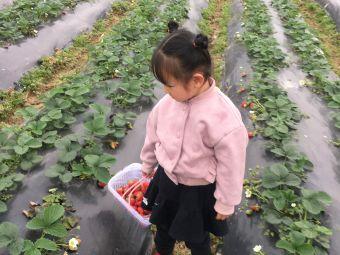 可口草莓园