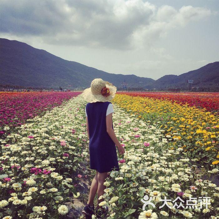 三亚凤凰花海风景区图片 - 第55张