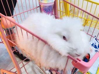 胖丁安哥拉巨兔主题馆