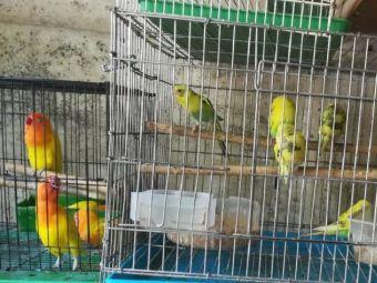 鱼鸟大世界馆