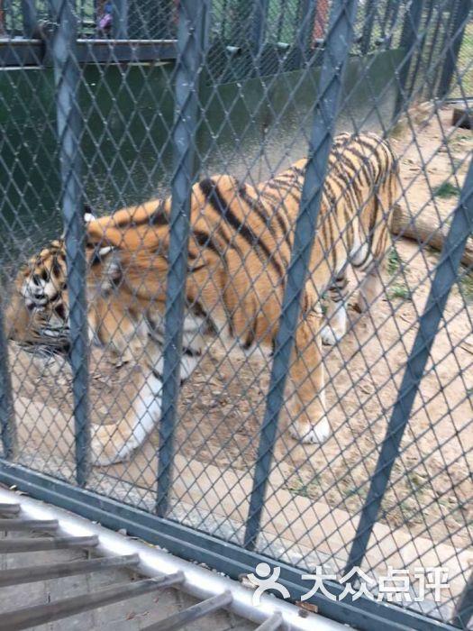 无锡动物园·太湖欢乐园图片 - 第14张