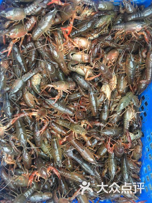 噶虾意龙虾-图片-宁波美食-大众点评网
