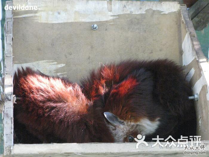 北京动物园高难度偷拍图片 - 第2张